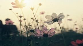 iDOCERS | Καθημερινή σκληρή μαγεία | Πόπη Γκερούση («Ψυχή σα θάλασσα»)