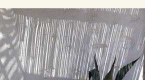 ΕΦΤΑ ΛΕΥΚΑ ΠΟΥΚΑΜΙΣΑ – ΘΟΔΩΡΗΣ ΓΚΟΝΗΣ | εκδόσεις Άγρα