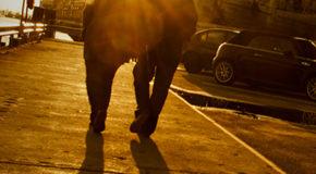 Η διαστροφή του επαγγέλματος | Μιχάλης Κατσιμπάρδης | 'ΑνεμοςMagazine