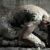 Το τραύμα τής γέννησης | Γιάννης Μάνικας | Άνεμος magazine