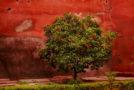 Το δέντρο της ζωής* | Σταμάτης Σουφλέρης | Άνεμος magazine