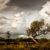 Το δέντρο του καλού και του κακού | Άρης Γεράρδης